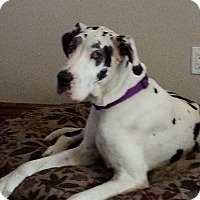 Adopt A Pet :: Chula - Mesa, AZ