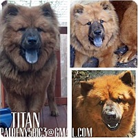 Adopt A Pet :: TITAN - Dix Hills, NY