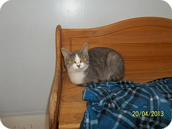 Domestic Shorthair Cat for adoption in Newburgh, Indiana - Maggie