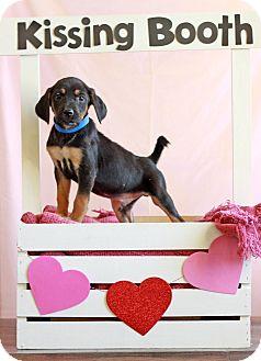 Beagle Mix Puppy for adoption in Waldorf, Maryland - Elmer