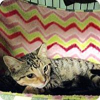 Adopt A Pet :: Starla - East Brunswick, NJ