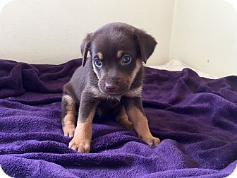 Terrier (Unknown Type, Small) Mix Puppy for adoption in Hartford, Connecticut - Rita