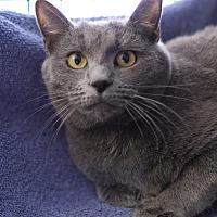 Adopt A Pet :: Chrissy - Winston-Salem, NC