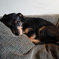 Adopt A Pet :: Jack - Redding, CA