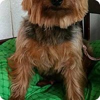 Adopt A Pet :: Jake - Crump, TN