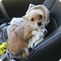 Adopt A Pet :: Phoebe - Hazard, KY