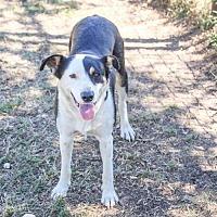 Adopt A Pet :: Naomi - Austin, TX