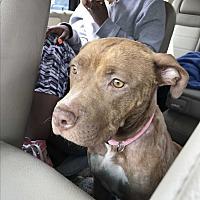 Adopt A Pet :: Jackie - Tumwater, WA
