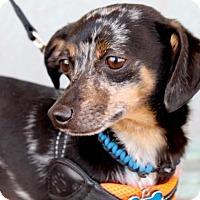 Adopt A Pet :: Dozier - Albuquerque, NM