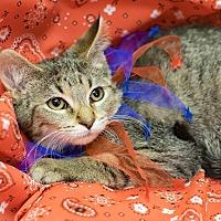 Adopt A Pet :: Lysander - Addison, IL