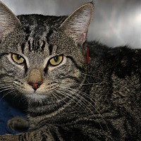 Adopt A Pet :: PURELL - Clayton, NJ