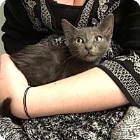Adopt A Pet :: Mizumi - Tampa, FL