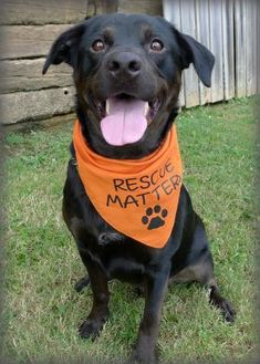 Labrador Retriever Mix Dog for adoption in Helena, Alabama - The Chief