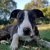 Adopt A Pet :: KITTY - Red Bluff, CA
