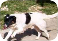 Spaniel (Unknown Type) Mix Dog for adoption in Metairie, Louisiana - SNOOPY