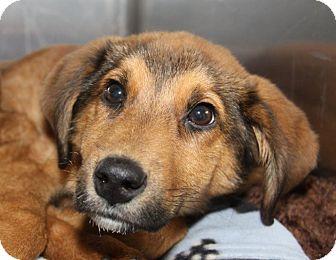 Shepherd (Unknown Type) Mix Dog for adoption in Orland Park, Illinois - Maddie