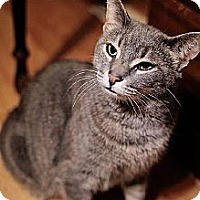 Adopt A Pet :: Mamma Kitty - Whitewater, WI