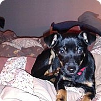 Adopt A Pet :: Jonah - Fresno, CA