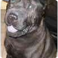 Adopt A Pet :: Pops - Bethesda, MD