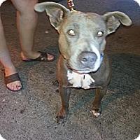 Adopt A Pet :: Thalia - Calgary, AB