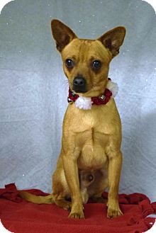 Chihuahua Mix Dog for adoption in Dublin, California - Mikey