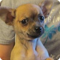 Adopt A Pet :: Flynn - Salem, NH