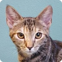 Adopt A Pet :: Karmen - Winchester, CA