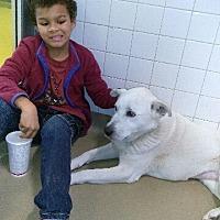 Adopt A Pet :: Foxy - haslet, TX