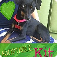 Adopt A Pet :: Kit - Troy, MI