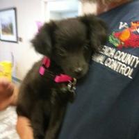 Adopt A Pet :: 35998700 - Los Lunas, NM