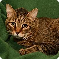 Adopt A Pet :: Smidget  *F* 'THE LOYAL LOVEY' - Sanford, FL