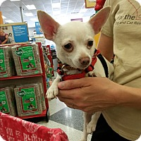 Adopt A Pet :: Chicken Little - San Dimas, CA
