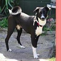 Adopt A Pet :: Dixie - Sweet Collie Mix - Millbrook, NY