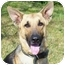 Photo 1 - German Shepherd Dog Dog for adoption in Pike Road, Alabama - Trooper