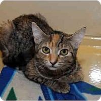 Adopt A Pet :: Marina - Farmingdale, NY
