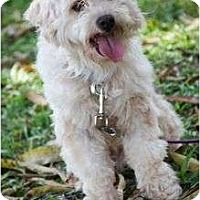 Adopt A Pet :: Cody - Pending - Vancouver, BC