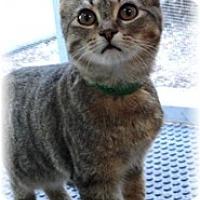 Adopt A Pet :: Cello - Shelton, WA