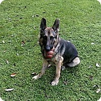 Adopt A Pet :: Felan - Green Cove Springs, FL