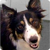 Adopt A Pet :: Gracie - Salt Lake City, UT