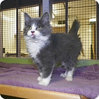 Adopt A Pet :: Angel - Dover, OH
