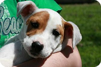 Spaniel (Unknown Type)/Black Mouth Cur Mix Dog for adoption in Von Ormy, Texas - MYSTIC