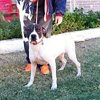 Adopt A Pet :: Richard - Glendale, AZ