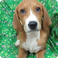 Adopt A Pet :: Grant - Bartonsville, PA