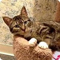 Adopt A Pet :: sasha - Fort Wayne, IN