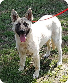 German Shepherd Dog Mix Dog for adoption in Colonial Heights, Virginia - Remington