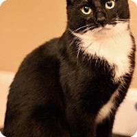 Adopt A Pet :: Silas - Merrifield, VA