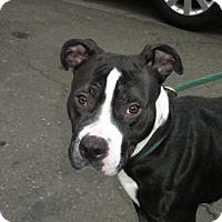 Adopt A Pet :: Ms.Tippy - McKenna, WA