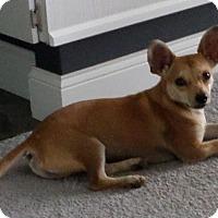 Adopt A Pet :: Pedro - Homewood, AL