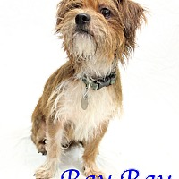 Adopt A Pet :: Ray Ray - Bradenton, FL