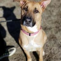 Adopt A Pet :: June Bug - justin, TX